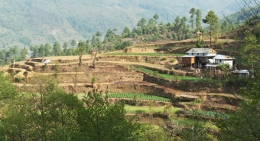 Terraced-farming-nepal
