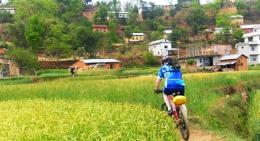 Biking the Green Paddy Fields