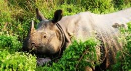 Chitwan-jungle