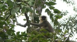 chitwan-national-park