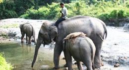 Elephnats-in-Chitwan