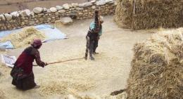 Farmers-using-traditional-equipments