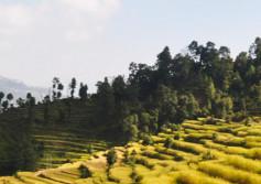 Homestay Trek Nepal